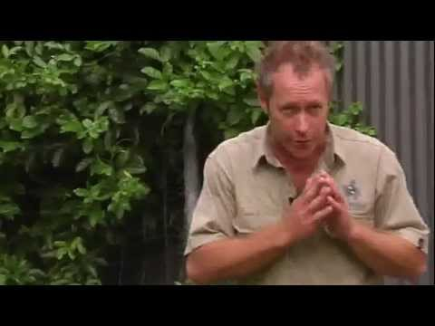 Lawn Watering Tips Sunshine Coast, Brisbane, Gympie