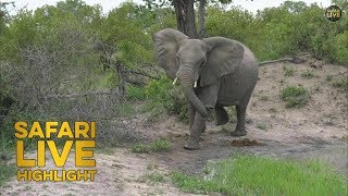 A Close Call in the Bush: Elephant Stampede thumbnail