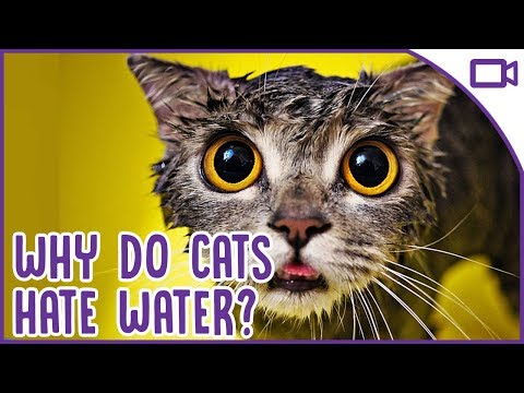 Reasons Why Cats Hate Water - They're Allergic?!