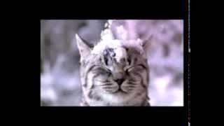Реклама Вискас -  Кот