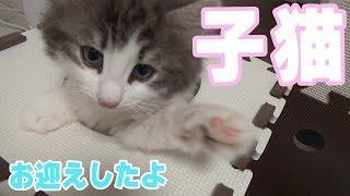 【猫】子猫をお迎えしましたのでご紹介します