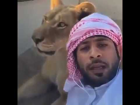 Dubai Prince Playing With His Pet Lions