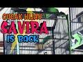 Road To Tobil Cup  Lama Tidak Tampil Usai Mabung C Hijau  Savira  Masih Tetap Di Tangga Juara  Mp3 - Mp4 Download