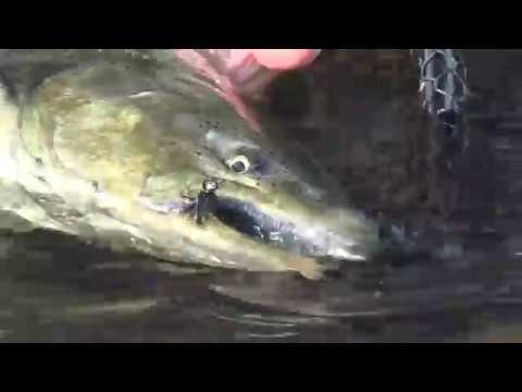 September Salmon Flies, Fishing TheSalmon River In Pulask New York