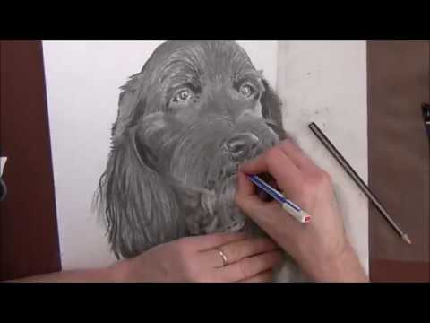 pencil-drawing-a-super-cute-dog-for-a-friend---time-lapse