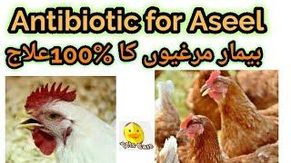 Aseel ki bemario ka ilaj-Antibiotic for aseel chickens (Pets