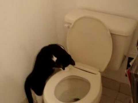 Parry Gripp - Cat Flushing The Toilet Lyrics