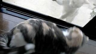 実家の外猫「あすか」が、私の連れ子「花」にけんかをふっかけてる現場...