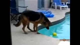 Śmieszne zachowania zwierząt