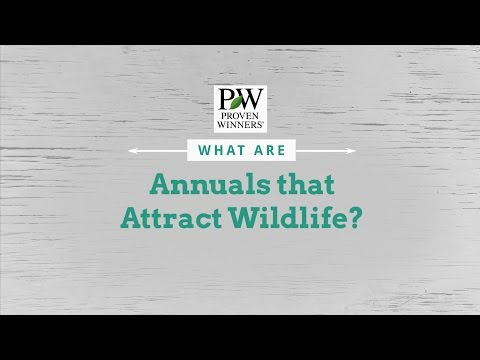 Annual Varieties that Attract Wildlife