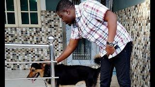 Aja Mi - Latest Yoruba Movie 2018 Drama Starring Wunmi Toriola | Muyiwa Ademola