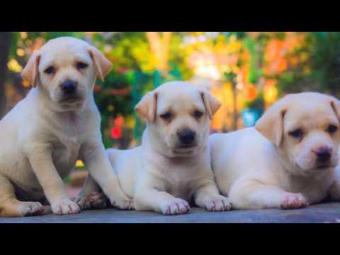 Bangalore Dog Adoption Youtube