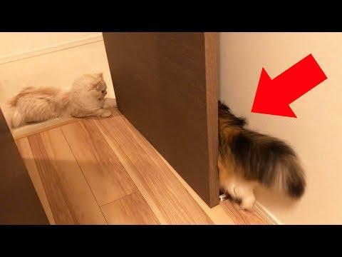 猫ってそんな狭いとこ入れるの?www