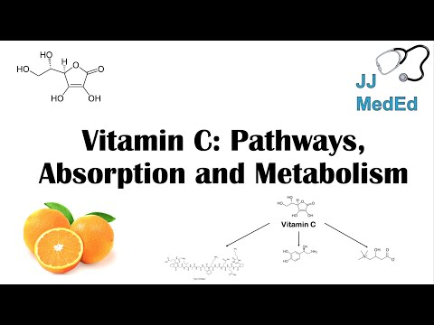 Vitamin C: Why We Need It, Dietary Sources, And How We Absorb And Metabolize It