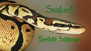 Snakes! Vorsicht Schlangen Dokumentation über Schlangen, Tierdokumentation auf Deutsch *HD*