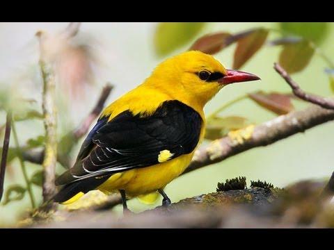Unsere Singvögel 2