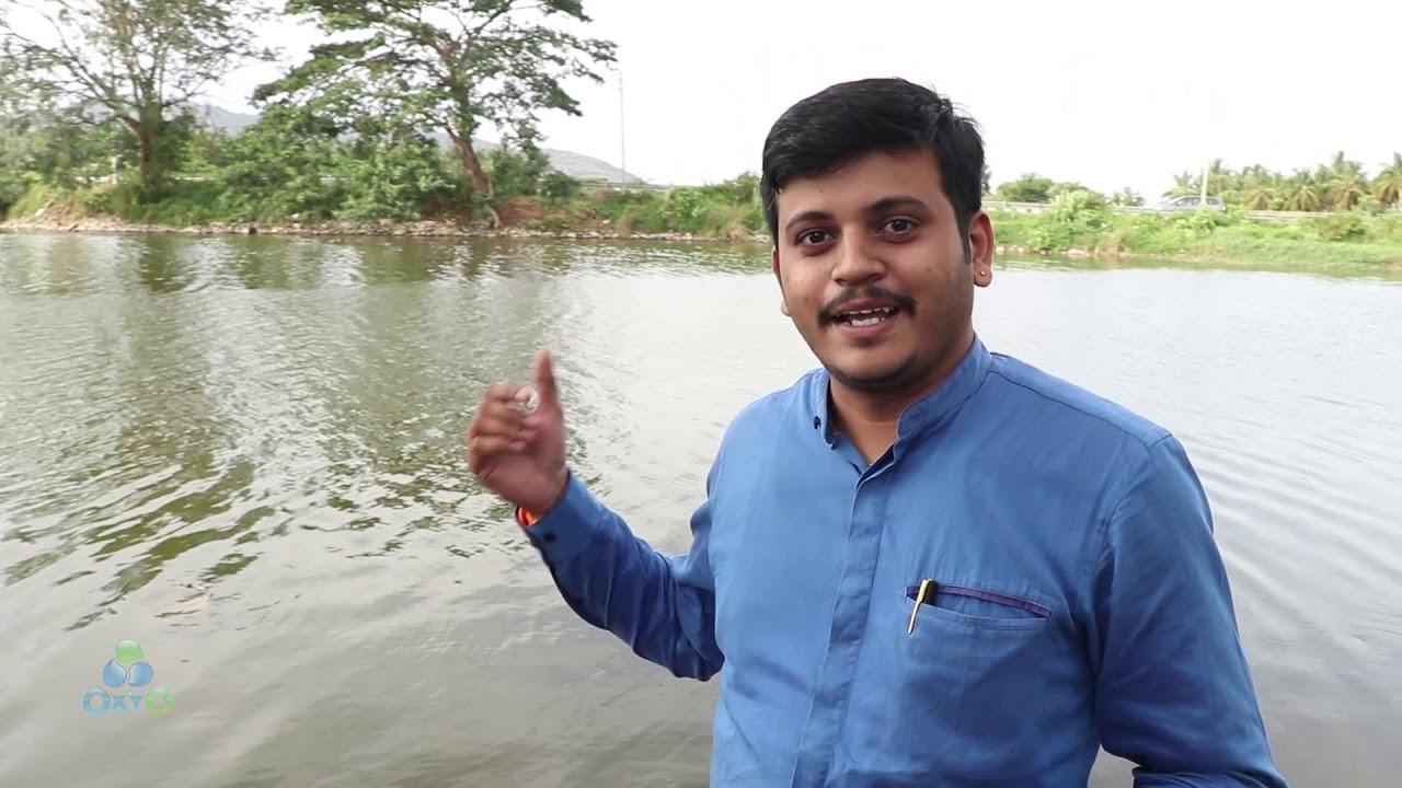 Download sewage water   #sewage   #Death of lake #Fishes   #Kannada