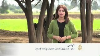 دعوة تونسية لتسهيل تصدير الحليب لإنقاذ الإنتاج