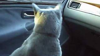 really pissed off cat