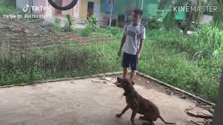 Tik tok Việt Nam || Động vật siêu hài (P1)