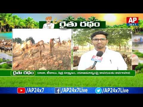 Success Story Of Brown Sheep Farming | Siddarampuram | Rythu Ratham | AP24x7