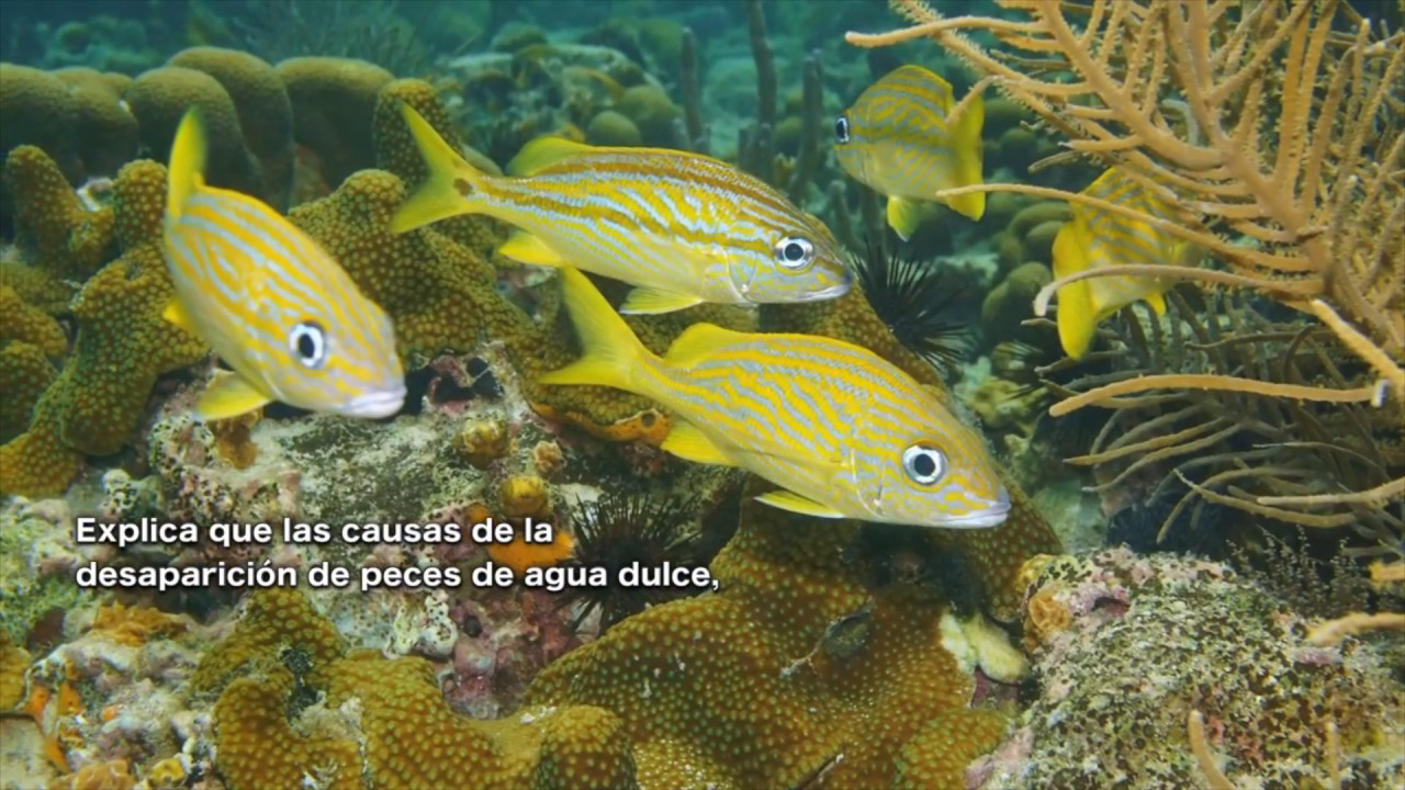 Estrategia para la conservaci n de peces de agua dulce en for Peces agua dulce