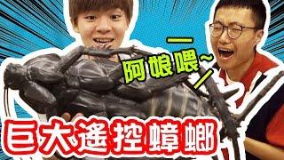 大蟑螂出擊!YouTuber驚聲尖叫,整人大成功【黃氏兄弟】 Ft.一大堆創作者 PRANK