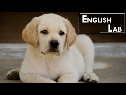 10 English Lab Facts Every Labrador Dog Owners Would Love To Know