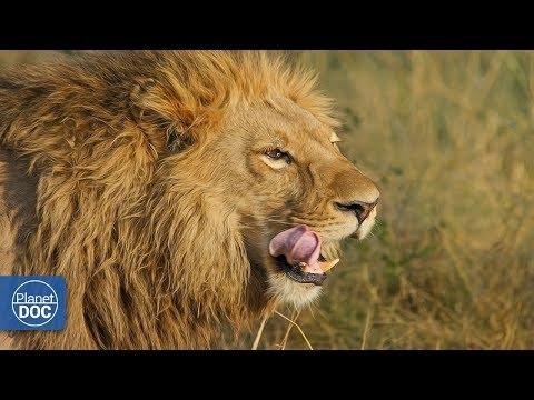 Ngorongoro Wildlife. Tanzania
