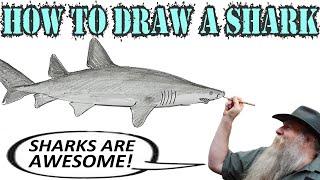 How to Draw a Shark- Grey Nurse (Beginner)- Spoken Tutorial