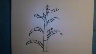 How to Draw a Cornstalk