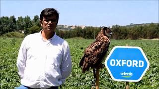 Experiência OXFORD