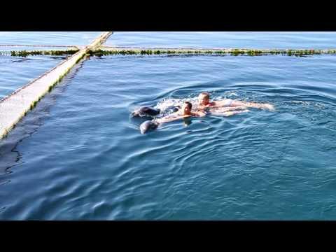 2010-07-30 Андрей плавает с дельфинами