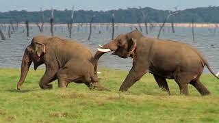 Sri Lanka 09 - Kaudulla NP   safari