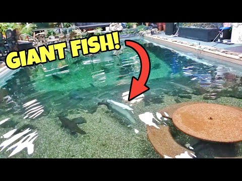 Adopting UNBELIEVABLE DREAM FISH From FISH SANCTUARY! (HEARTWARMING)