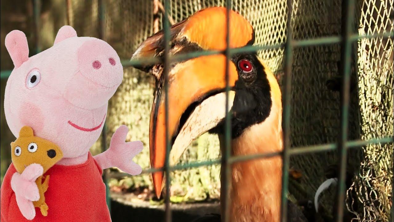 экскурсия знакомство с птицами