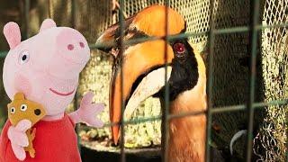 Свинка Пеппа в Парке птиц. Гуляем по зоопарку. Обучающий мультфильм - знакомство с птицами