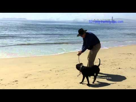 Dog Training at Dog Beach in Long Beach