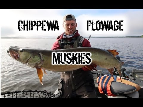 Trolling For Summer Muskies - Chippewa Flowage -Hayward, Wisconsin