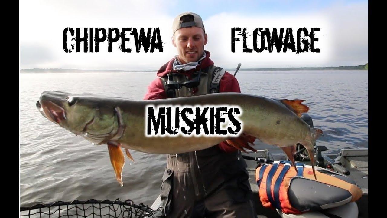 Chippewa Flowage Muskie Study - Y1 - musky.com
