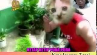 tarling Kucing Desa- Dina Maryana.flv