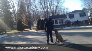 Shock Collars! | Majors Academy Dog Training And Rehabilitation