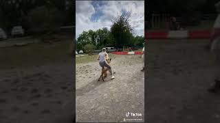 Malinois Belgian Shepherd Attack