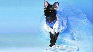 Белое платье для кошки