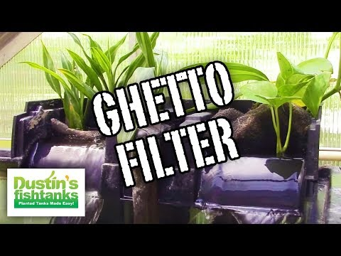 How to FILTER the Ghetto Aquarium - Ghetto Aquarium FILTER and Maintenance