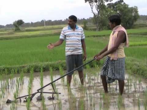 thesis on rice transplanter