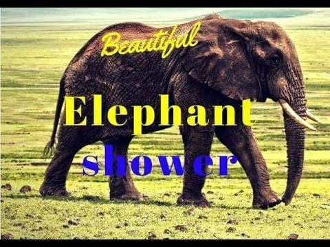 Beautiful Elephant shower-2017/funny videos/best videos of 2017/funny elephants/elephant bath/