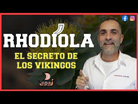Rhodiola. Propiedades de la Rodiola