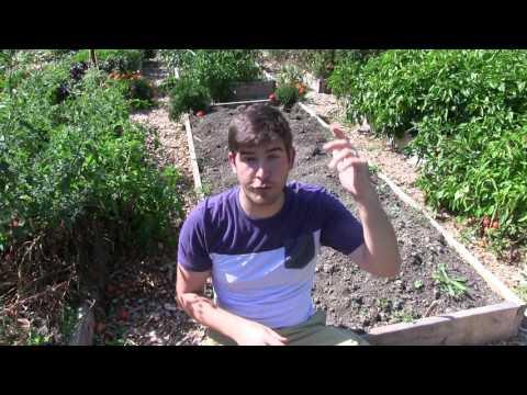 5 Gardening Myths Worth Forgetting Forever