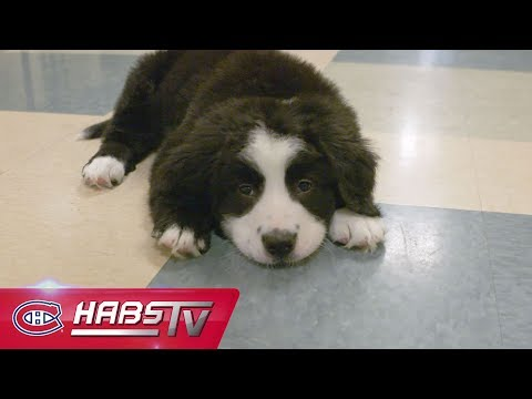 Why the Chicago Blackhawks Should Get a Team Puppy